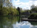 Junction of the River Stort