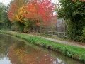 Autumn colours on the canal